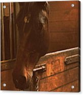 Horse In A Stable Acrylic Print