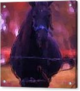 Horse In Autumn Light Acrylic Print