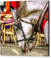 Horse In Cracow Acrylic Print