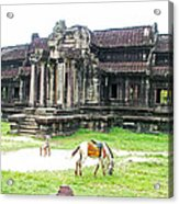 Horse In Front Of Outer Building In Angkor Wat In Angkin Angkor Wat Archeological Park-cambodia Acrylic Print