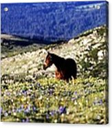 Horse In Mountain Wildflowers Acrylic Print by Rebecca Adams