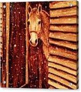 Horse In Snow Acrylic Print