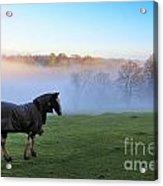 Horse In The Mist Acrylic Print