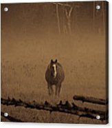 Horse In The Mist Acrylic Print