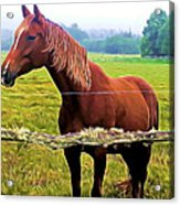 Horse In The Pasture Acrylic Print