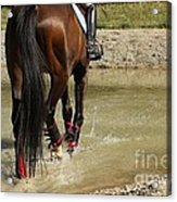 Horse In Water Acrylic Print