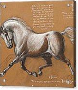 Horse Is Beautiful # 4 Acrylic Print