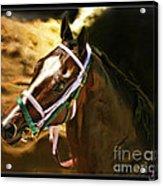 Horse Last Memories Acrylic Print