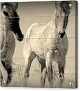 Horse Mysteries.. Acrylic Print by Al  Swasey