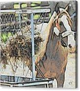 Horse N Hay Acrylic Print