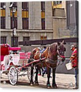 Horse Needs Water In Old Montreal-quebec-canada Acrylic Print