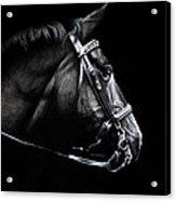 Horse No. 2 Acrylic Print