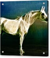 Horse Of Light Acrylic Print by Jo Collins