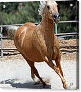 Horse On The Run Acrylic Print
