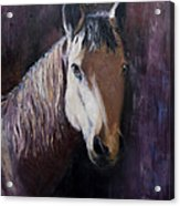 Horse Painting Acrylic Print