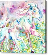 Horse Painting.17 Acrylic Print