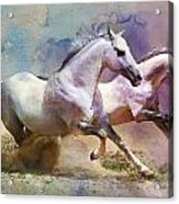 Horse Paintings 004 Acrylic Print