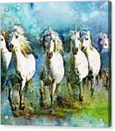 Horse Paintings 006 Acrylic Print by Catf