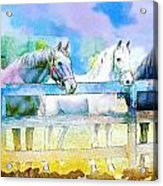 Horse Paintings 008 Acrylic Print