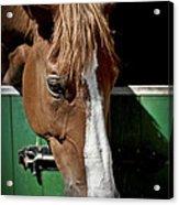 Horse Portrait Acrylic Print