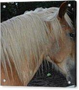 Horse Profile Acrylic Print by Cim Paddock