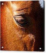 Horse Profile Acrylic Print