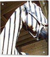 Horse Stripes Acrylic Print