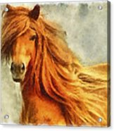 Horse Two Acrylic Print