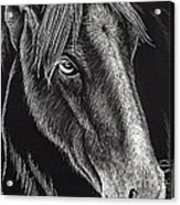 Horse Up Close Acrylic Print