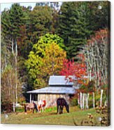 Horses And Barn In The Fall Acrylic Print