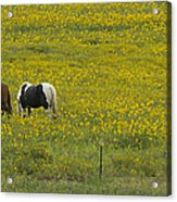 Horses And Wildflowers   #8511 Acrylic Print