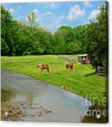 Horses At Home On The Range Acrylic Print