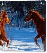 Horses At Play Acrylic Print