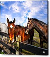 Horses At The Fence Acrylic Print
