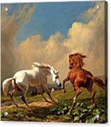 Horses Balking At Approaching Storm Acrylic Print