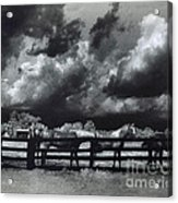 Horses Black And White Infrared Stormy Sky Nature Landscape Acrylic Print