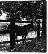 Horses By The Fence Acrylic Print