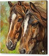 Horses Acrylic Print by David Stribbling