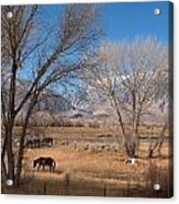 Horses Graze Beside The Owens River Near Bishop Acrylic Print