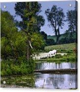 Horses Grazing At Water's Edge Acrylic Print