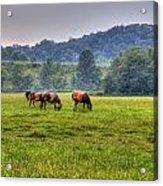Horses In A Field 2 Acrylic Print