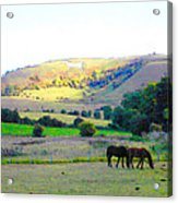 Horses In The English Countryside Acrylic Print
