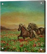 Horses In The Field With Poppies Acrylic Print