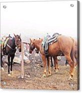 Horses In The Mist - Haleakala Acrylic Print