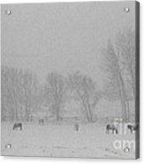 Horses In The Snow   #2547 Acrylic Print