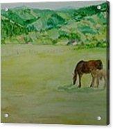 Horses Mare Foal Pastures Rural Landscape Original Art Oregon Western Artist K. Joann Russell Acrylic Print
