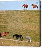 Horses Of Hayward Acrylic Print