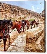 Horses Of Petra Acrylic Print