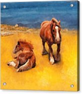 Horses On The Coast Of Brittany Acrylic Print