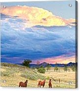 Horses On The Storm 2 Acrylic Print